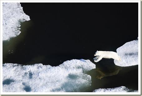 Polar Bear - Photo courtesy of Earthjustice.org